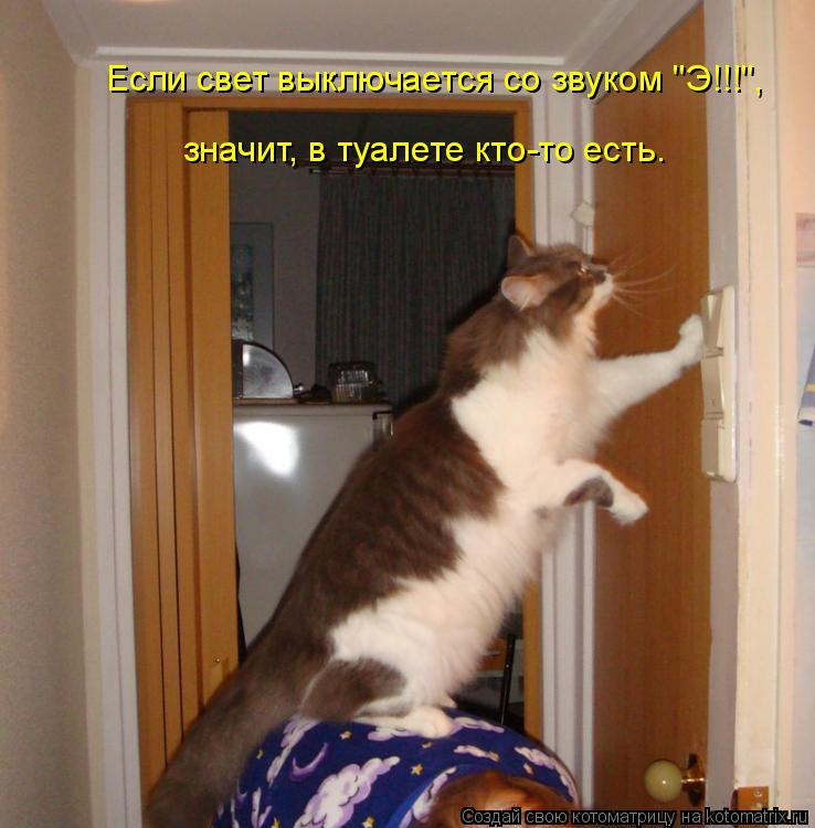 """Котоматрица: Если свет выключается со звуком """"Э!!!"""",  значит, в туалете кто-то есть…"""