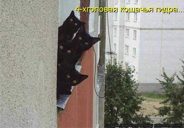 Котоматрица: 4-хголовая кошачья гидра...
