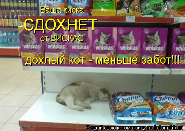 Котоматрица: Ваша киска  Ваша киска  СДОХНЕТ от ВИСКАС: дохлый кот - меньше забот!!!