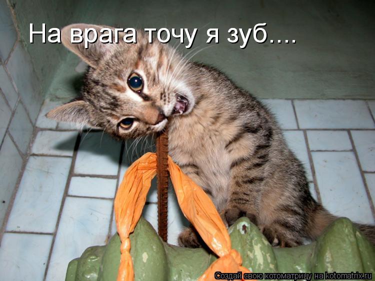 Котоматрица: На врага точу я зуб.... На врага точу я зуб....