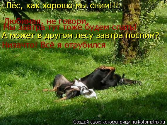 Котоматрица: Пёс, как хорошо мы спим!!! Любимая, не говори, Мы завтра тут тоже будем спать! А может в другом лесу завтра поспим? Низачто! Всё я отрубился