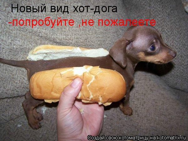 Котоматрица: Новый вид хот-дога -попробуйте ,не пожалеете