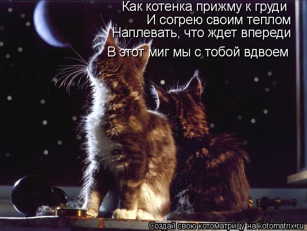 Котоматрица: Как котенка прижму к груди И согрею своим теплом Наплевать, что ждет впереди В этот миг мы с тобой вдвоем