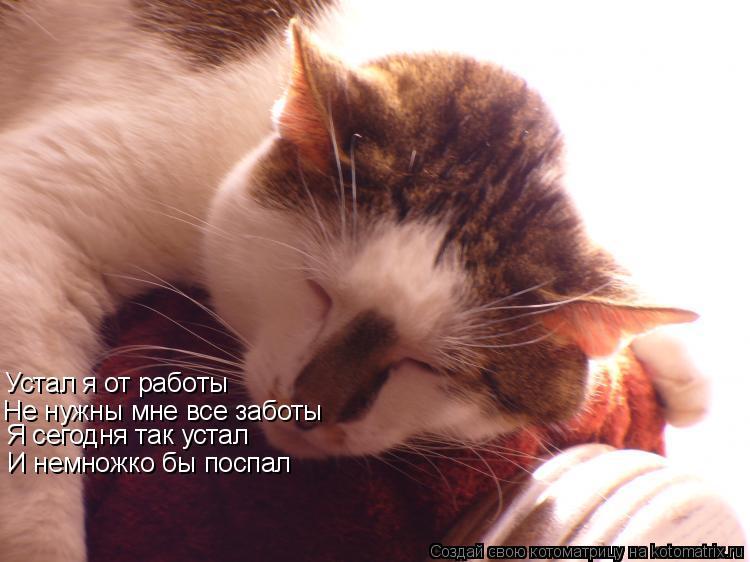 Котоматрица: Устал я от работы Не нужны мне все заботы И немножко бы поспал Я сегодня так устал Я сегодня так устал