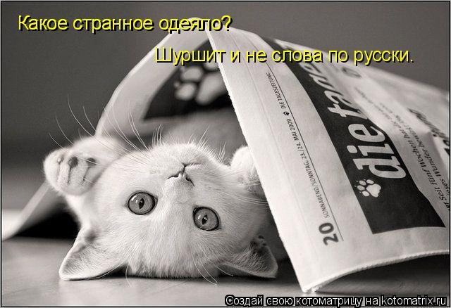 Котоматрица: Какое странное одеяло?  Какое странное одеяло?  Шуршит и не слова по русски.