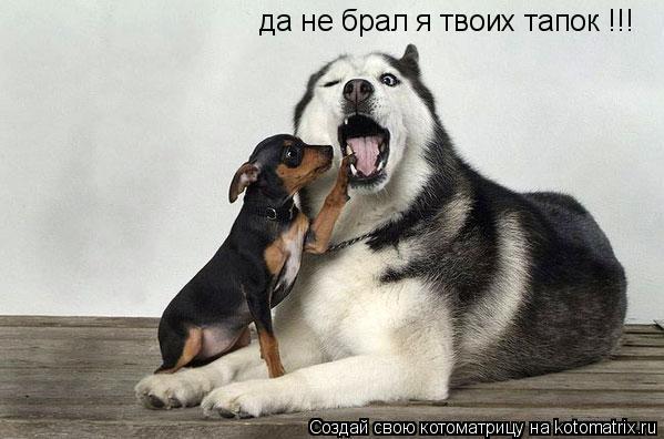 Котоматрица: да не брал я твоих тапок !!!