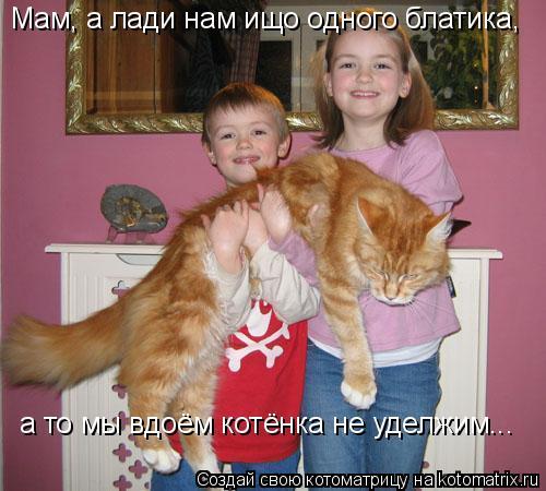 Котоматрица: Мам, а лади нам ищо одного блатика, а то мы вдоём котёнка не уделжим...