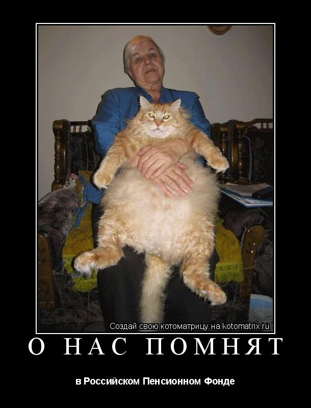 Котоматрица: о нас помнят в Российском Пенсионном Фонде
