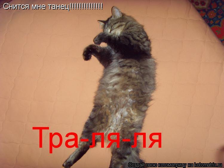 Котоматрица: Снится мне танец!!!!!!!!!!!!!! Тра-ля-ля