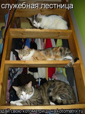 Котоматрица: служебная лестница