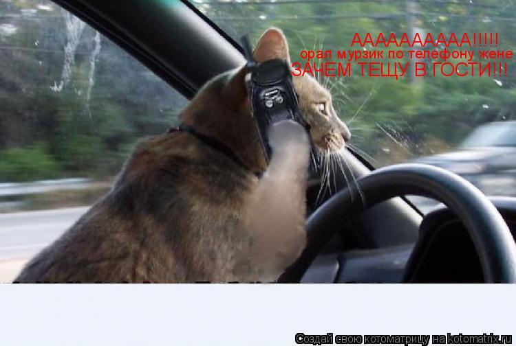 Котоматрица: АААААААААА!!!!! орал мурзик по телефону жене ЗАЧЕМ ТЕЩУ В ГОСТИ!!!
