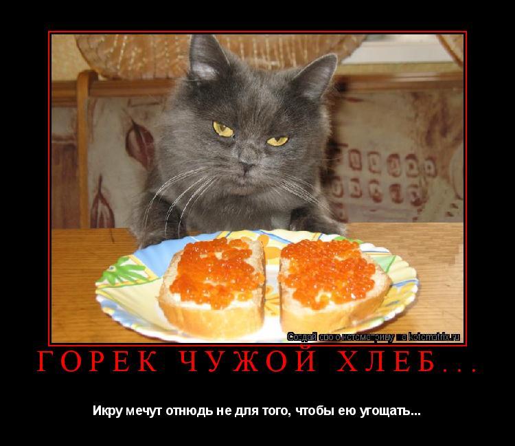 Котоматрица: Горек чужой хлеб... Икру мечут отнюдь не для того, чтобы ею угощать...