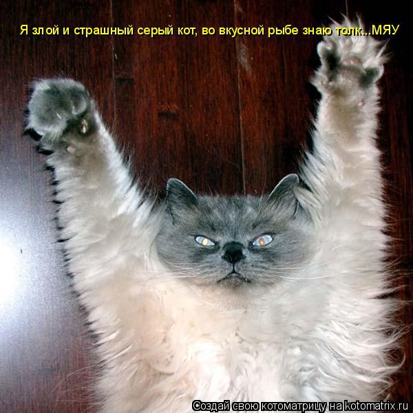 Котоматрица: Я злой и страшный серый кот, во вкусной рыбе знаю толк...МЯУ Я злой и страшный серый кот, во вкусной рыбе знаю толк...МЯУ
