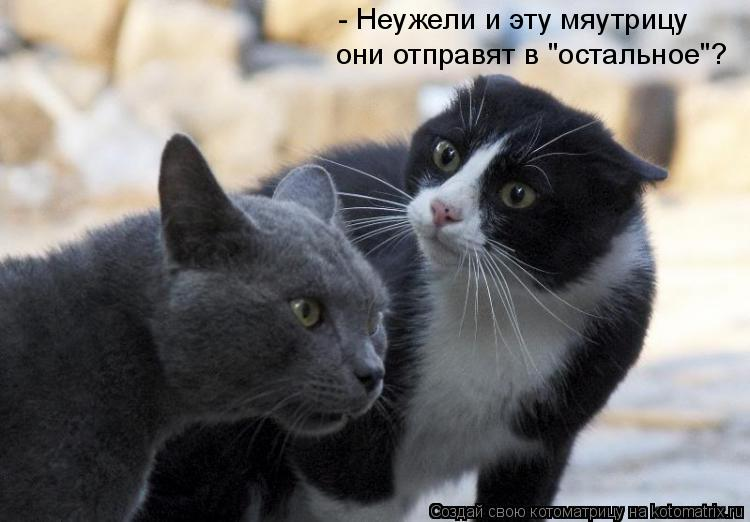 """Котоматрица: - Неужели и эту мяутрицу они отправят в """"остальное""""?"""