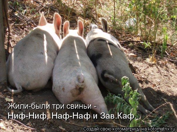 Котоматрица: Жили-были три свиньи -  Ниф-Ниф, Наф-Наф и Зав.Каф.