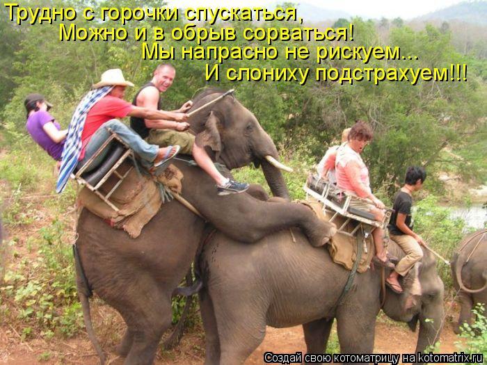 Котоматрица: Трудно с горочки спускаться,  Можно и в обрыв сорваться! Мы напрасно не рискуем... И слониху подстрахуем!!!