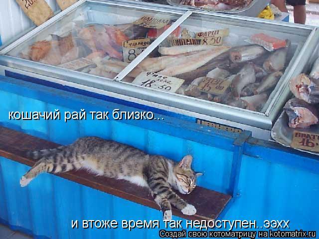 Котоматрица: кошачий рай так близко... и втоже время так недоступен..ээхх