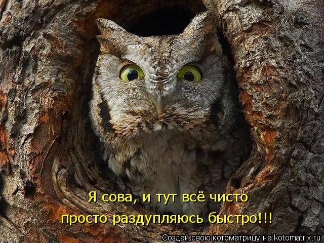 Котоматрица: Я сова, и тут всё чисто просто раздупляюсь быстро!!!
