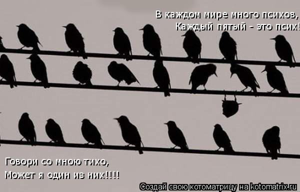 Котоматрица: В каждом мире много психов, Каждый пятый - это псих! Говори со мною тихо, Может я один из них!!!!
