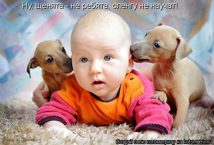 Котоматрица: Ну, щенята - не ребята, сленгу не научат!