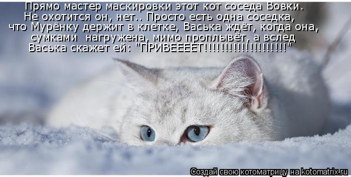 Котоматрица: Прямо мастер маскировки этот кот соседа Вовки. Не охотится он, нет…. Просто есть одна соседка, что Мурёнку держит в клетке, Васька ждёт, когд