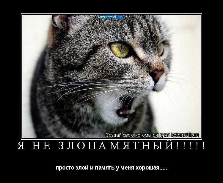 Котоматрица: Я не злопамятный!!!!! просто злой и память у меня хорошая.....