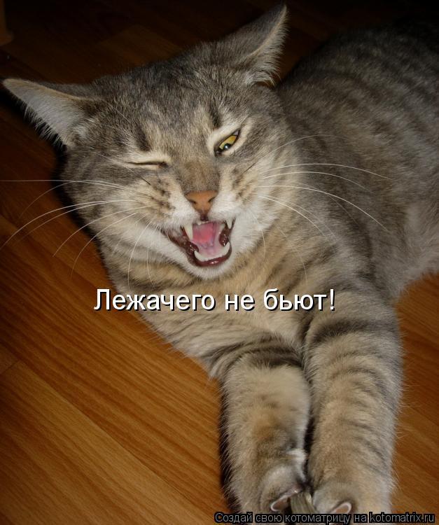 Котоматрица: Лежачего не бьют!