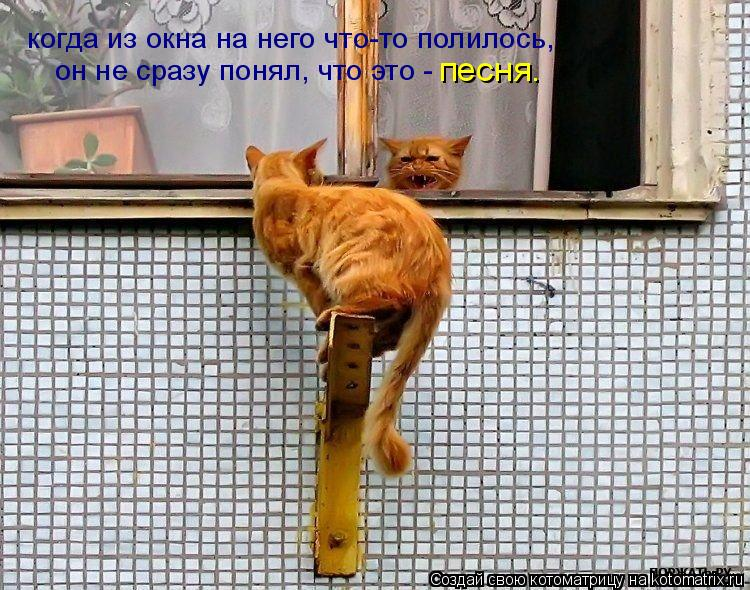 Котоматрица: когда из окна на него что-то полилось, он не сразу понял, что это - песня.