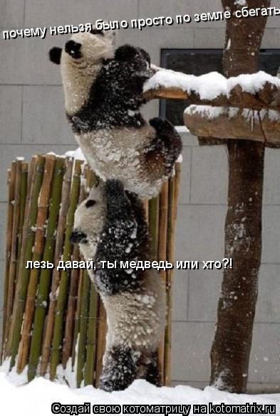 Котоматрица: лезь давай, ты медведь или хто?! почему нельзя было просто по земле сбегать?!