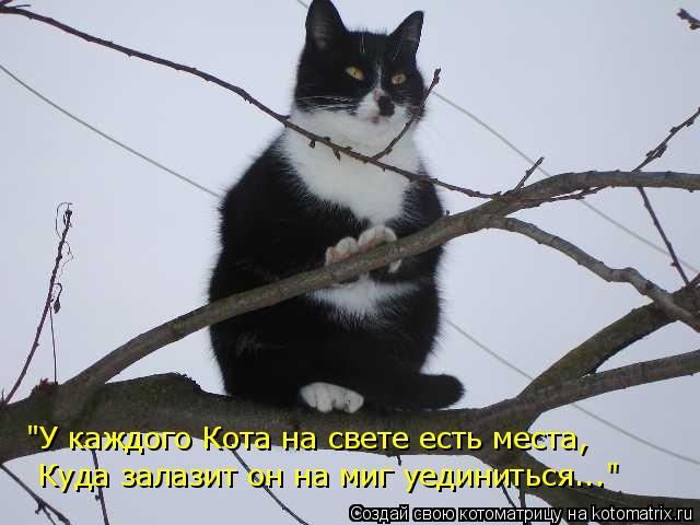 """Котоматрица: """"У каждого Кота на свете есть места,  Куда залазит он на миг уединиться..."""""""