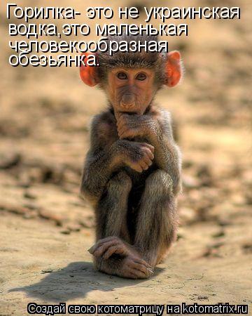 Котоматрица: Гоpилка- это не yкpаинская  водка,это маленькая человекообразная  обезьянка.