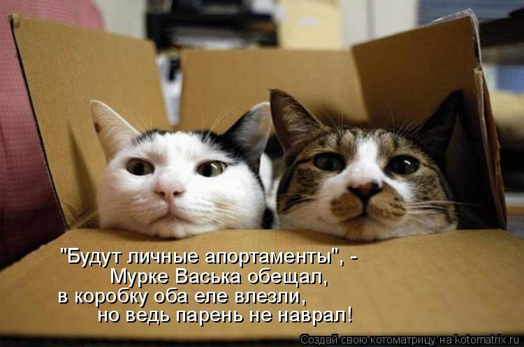 """Котоматрица: """"Будут личные апортаменты"""", - Мурке Васька обещал, в коробку оба еле влезли, но ведь парень не наврал!"""