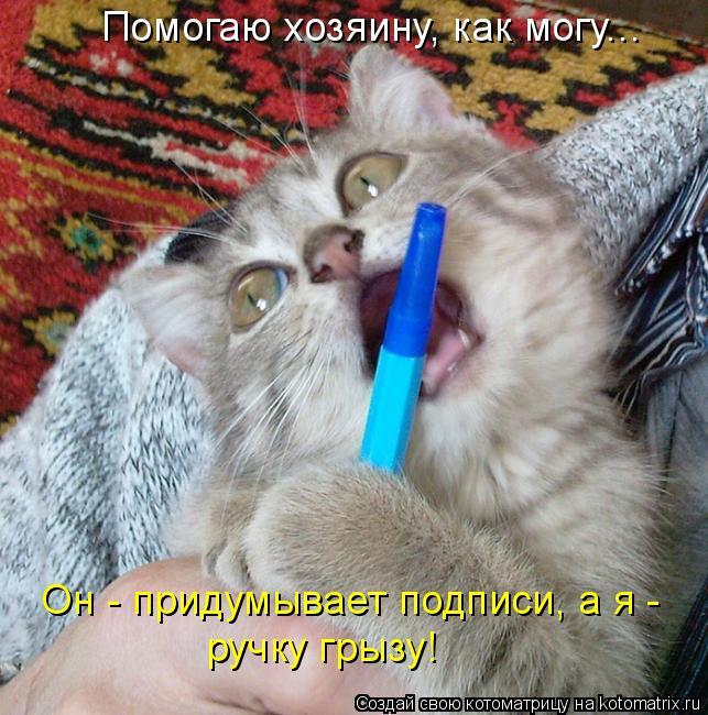 Котоматрица: Помогаю хозяину, как могу... Он - придумывает подписи, а я - ручку грызу!