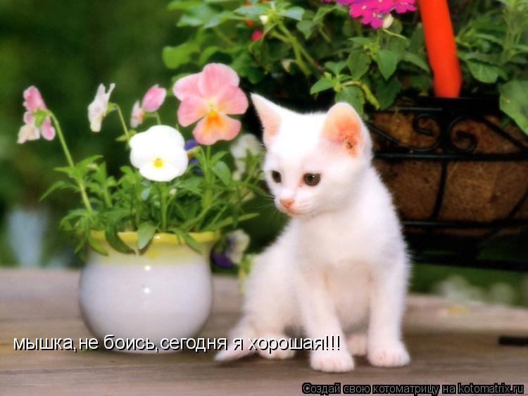 Котоматрица: мышка,не боись,сегодня я хорошая!!!