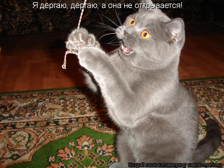 Котоматрица: Я дёргаю, дёргаю, а она не открывается!