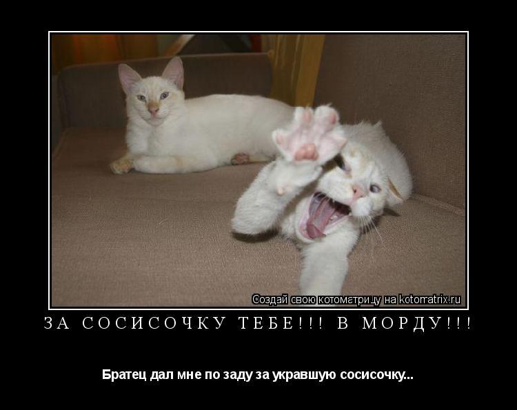 Котоматрица: За сосисочку тебе!!! В морду!!! Братец дал мне по заду за укравшую сосисочку...