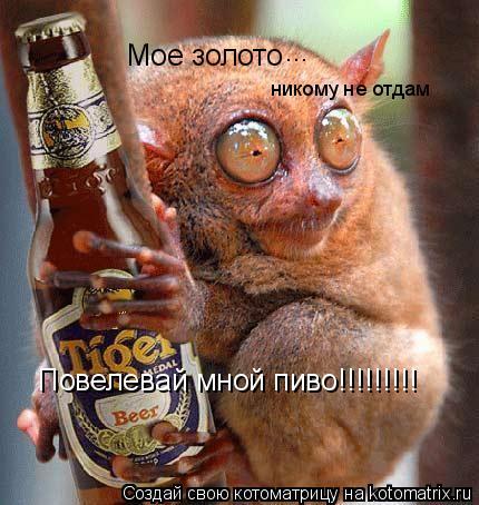 Котоматрица: Мое золото ... никому не отдам Повелевай мной пиво!!!!!!!!!