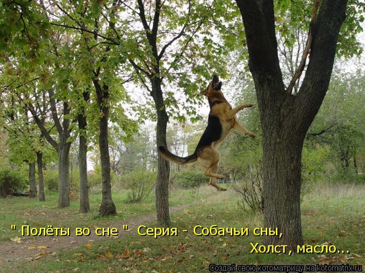 """Котоматрица: Холст, масло... """" Полёты во сне """"  Серия - Собачьи сны,"""