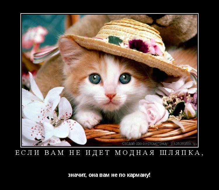 Котоматрица: Если Вам не идет модная шляпка, значит, она вам не по карману!