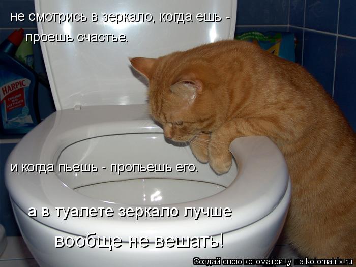 Котоматрица: не смотрись в зеркало, когда ешь - проешь счастье. и когда пьешь - пропьешь его. а в туалете зеркало лучше вообще не вешать!