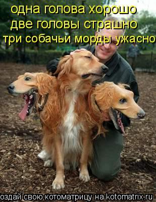 Котоматрица: одна голова хорошо две головы страшно три собачьи морды ужасно