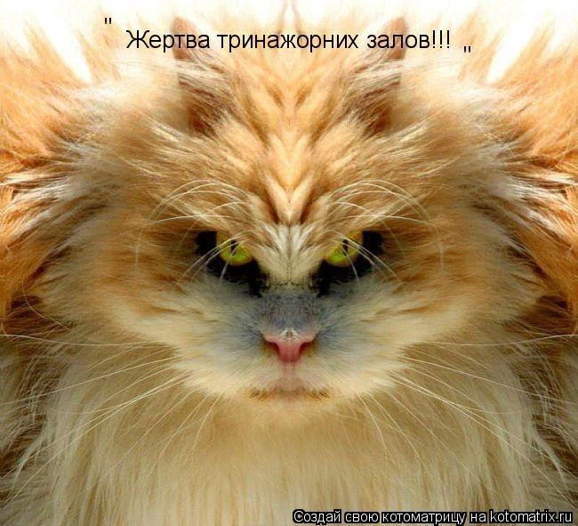 """Котоматрица: Жертва тринажорних залов!!! """" """""""