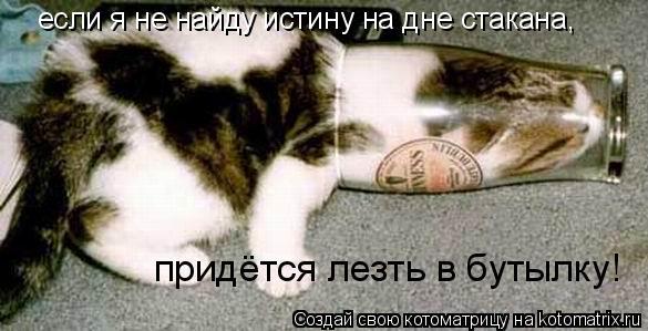Котоматрица: если я не найду истину на дне стакана, придётся лезть в бутылку!