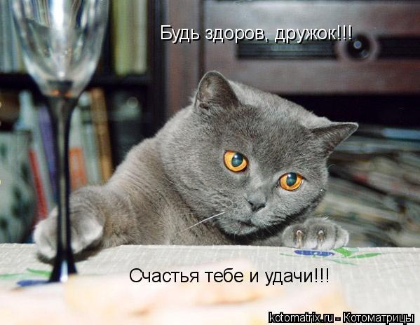 Котоматрица: Будь здоров, дружок!!! Счастья тебе и удачи!!!