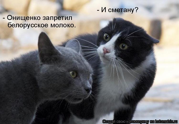 Котоматрица: - Онищенко запретил  белорусское молоко.  - И сметану?