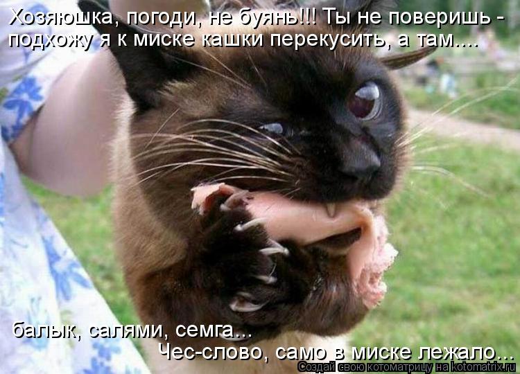 Котоматрица: Хозяюшка, погоди, не буянь!!! Ты не поверишь - подхожу я к миске кашки перекусить, а там.... балык, салями, семга... Чес-слово, само в миске лежало..