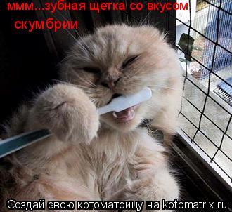Котоматрица: ммм...зубная щетка со вкусом скумбрии
