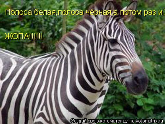 Котоматрица: Полоса белая,полоса чёрная,а потом раз и ЖОПА!!!!!! ЖОПА!!!!!!
