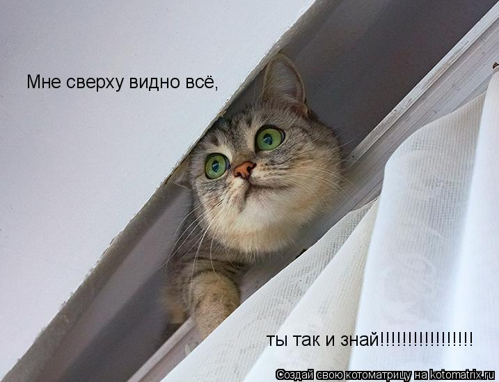Котоматрица: Мне сверху видно всё, ты так и знай!!!!!!!!!!!!!!!!!