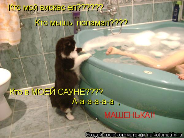 Котоматрица: Кто мой вискас ел?????? Кто мышь  поламал???? Кто в МОЕЙ САУНЕ???? А-а-а-а-а-а  , МАШЕНЬКА!!